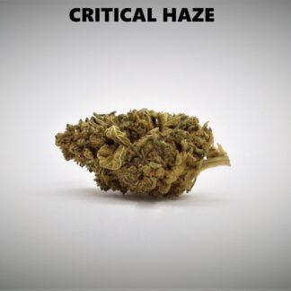 Critical Haze Produkt