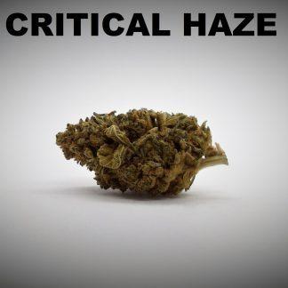 Critical Haze Titel